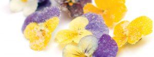 flores-comestibles