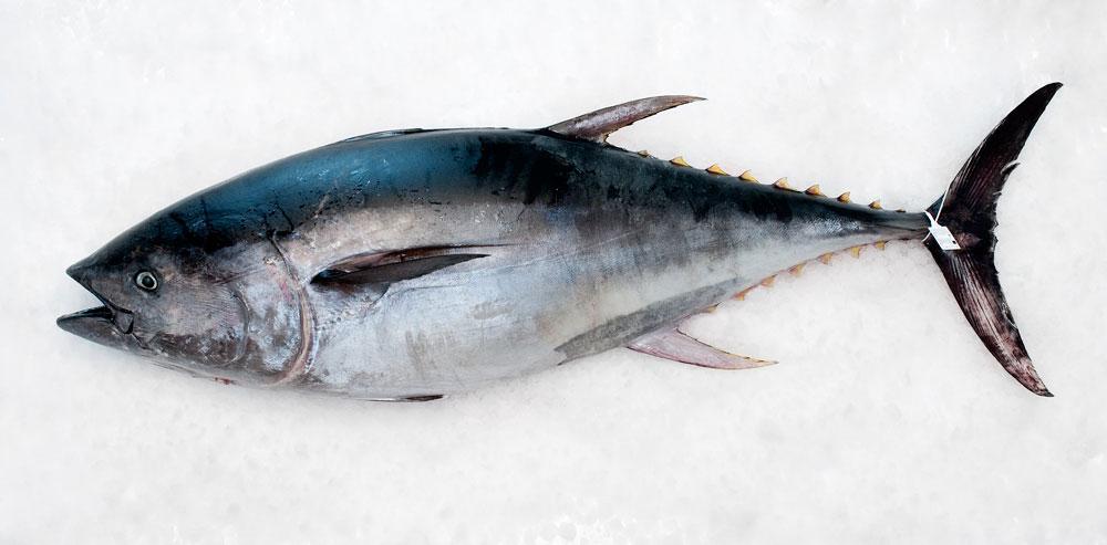 PETACA-CHICO-atun