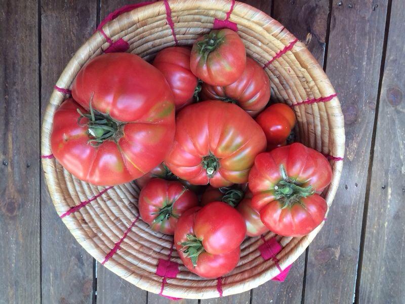 tomate rosa 2